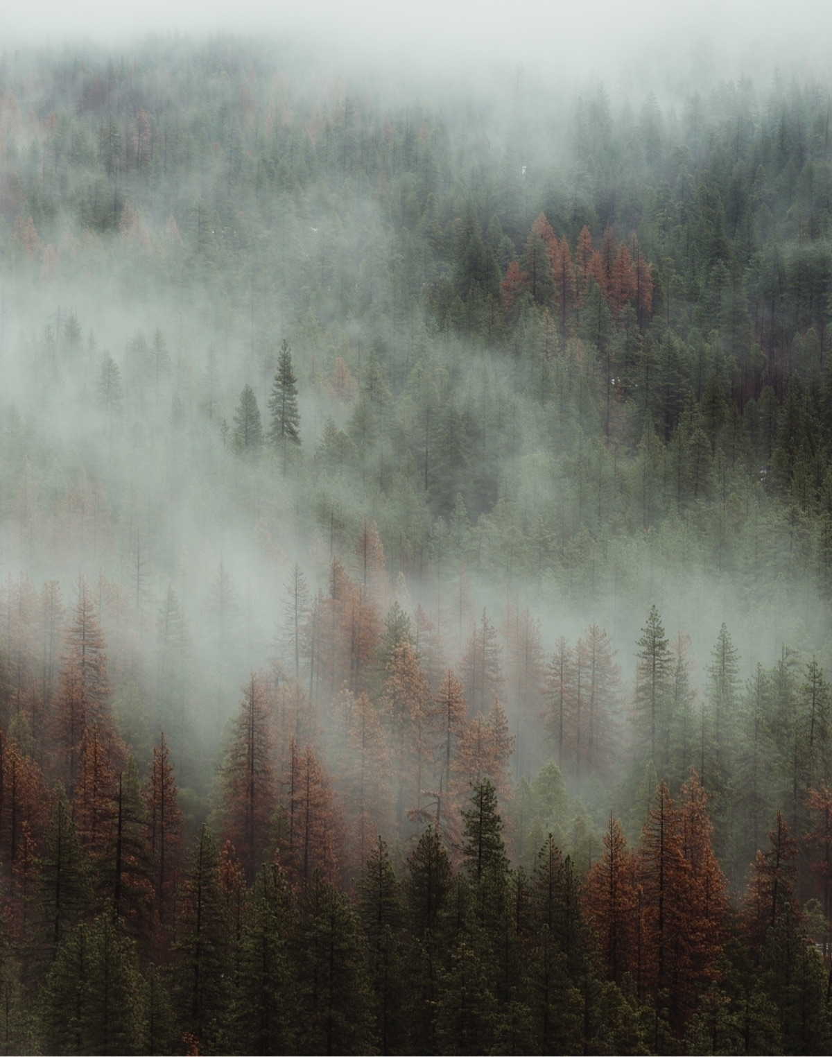 Yosemite breathing heavy mornin - peteramend | ello