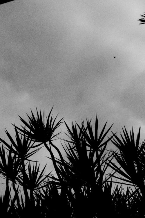 Hazy Morning Black Birds Flying - mikefl99 | ello