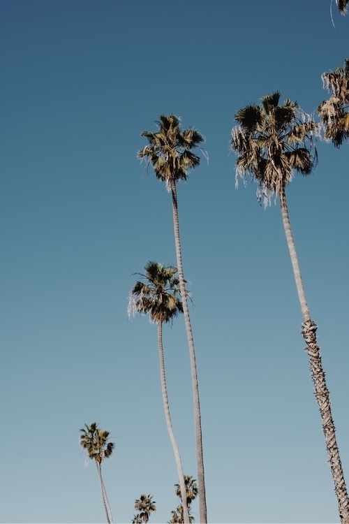 Californie - sky, palmtree, california - emmanuellebergeon | ello