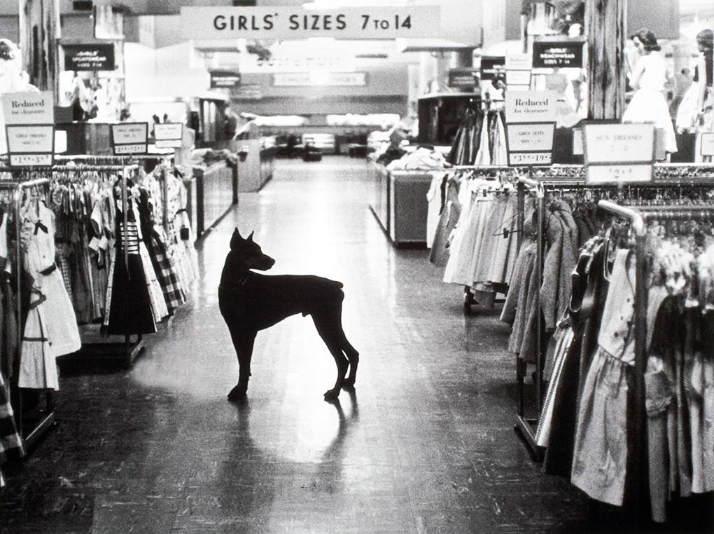 Guard Dog Department Store, Yor - raymitheminx   ello
