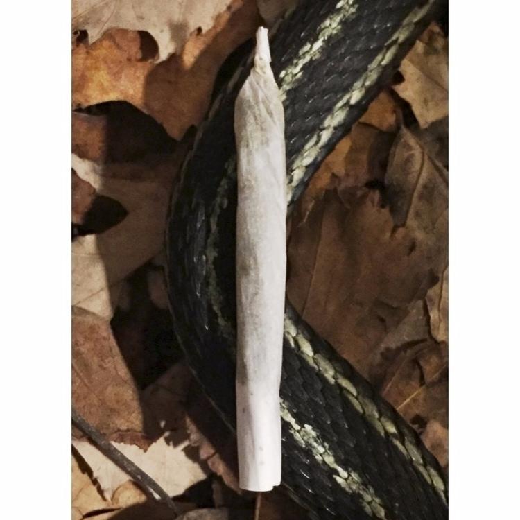 Portrait Garden Snake - marijuana - jphoto_project | ello
