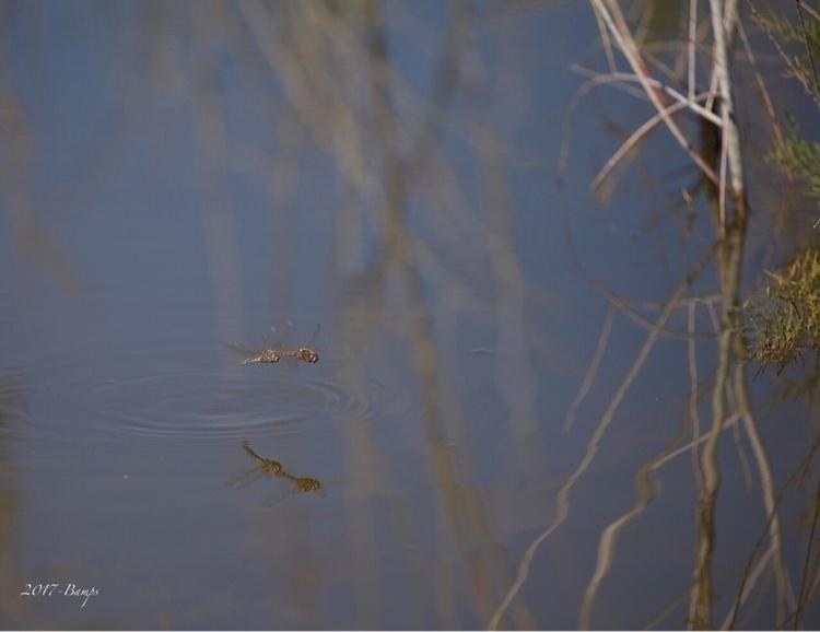 Nature lake  - nature_shots, nature_photos - bamps | ello