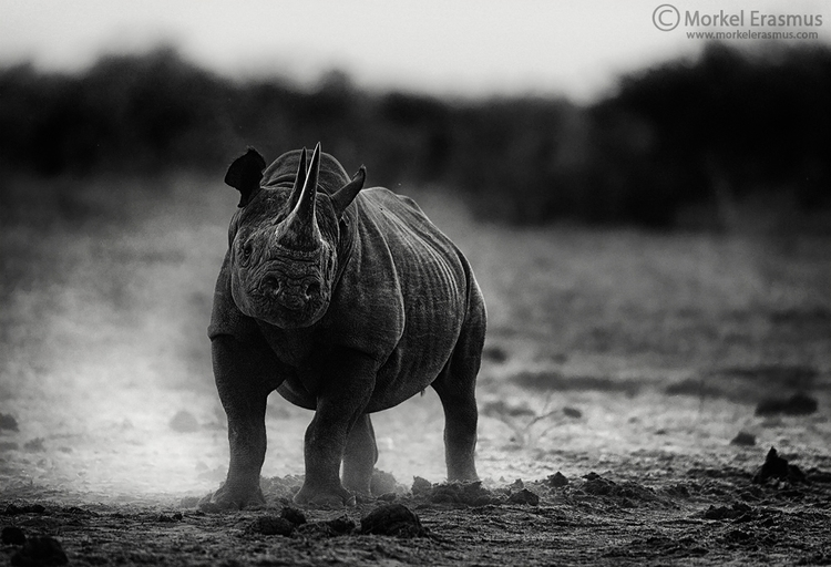Horned Hulk photo honoured 2016 - morkelerasmus | ello
