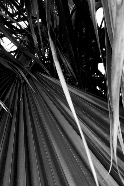 Palm Tree Jungle Evening Apps - mikefl99 - mikefl99 | ello