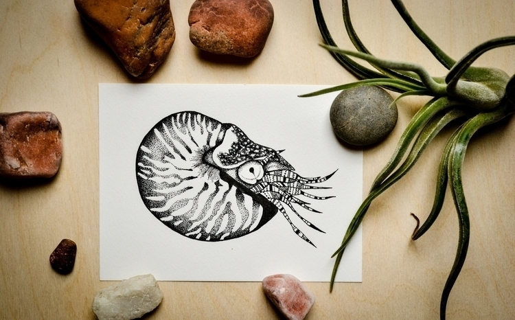 shy nautilus fun tentacles - ink - bowsbeadsbirds | ello