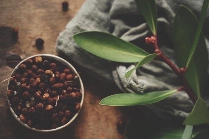 Mountain Pepper {Tasmannia lanc - spiritwoods   ello