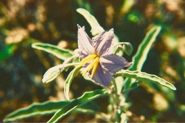 Wildflowers Canon EOS Rebel 200 - lightingbug1 | ello