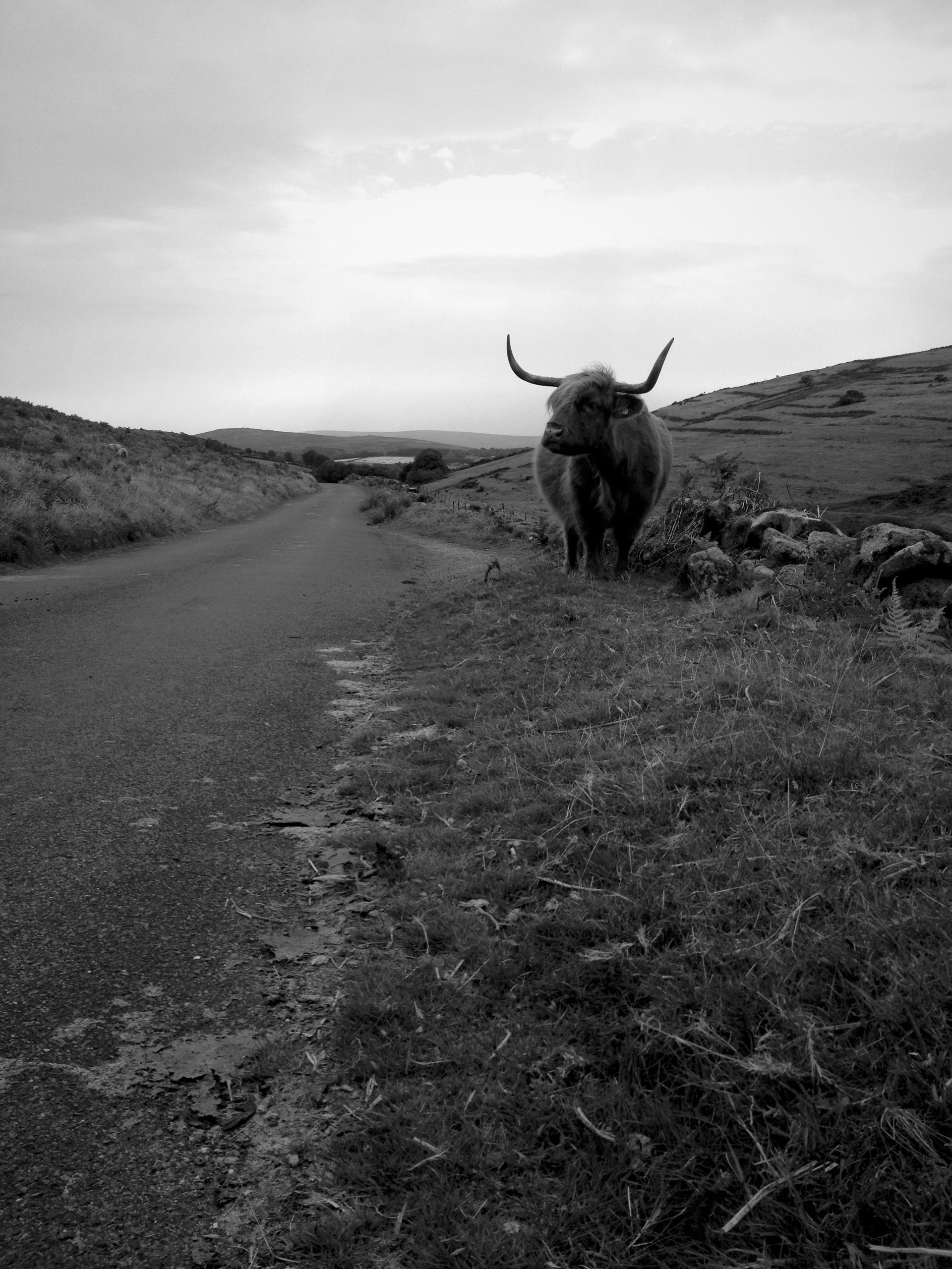 Land met pixies, headless horse - nesbitandgibley | ello