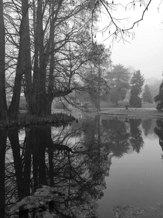 Cemetery - blackandwhite, cemetery - livetransmission | ello