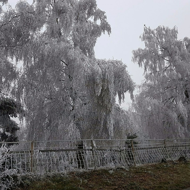 Winter - nelo1 | ello