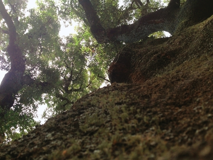 """Essays Trees - ambient, fieldrecording - vansorgen_   ello"