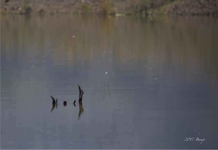 lake  - flooded_tree, arizona, nature - bamps   ello