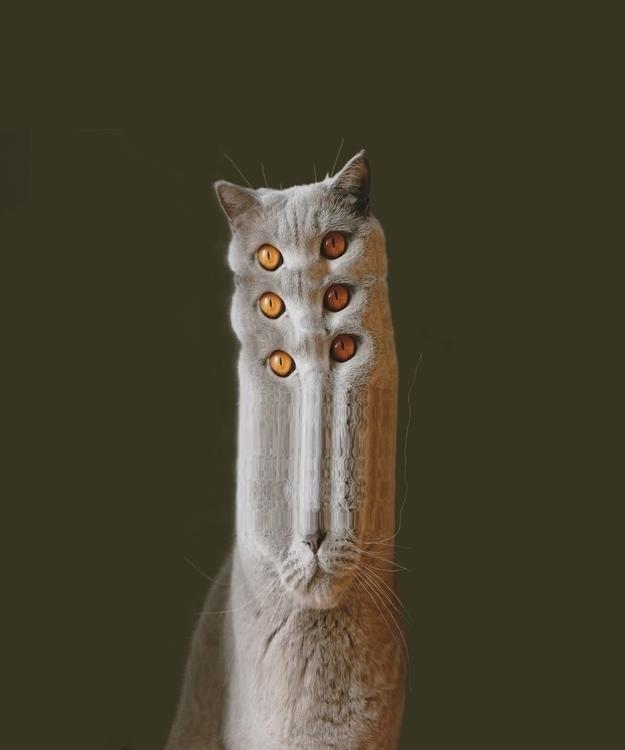 Cat whiskers / Scanography 2017 - parkerandloulou | ello