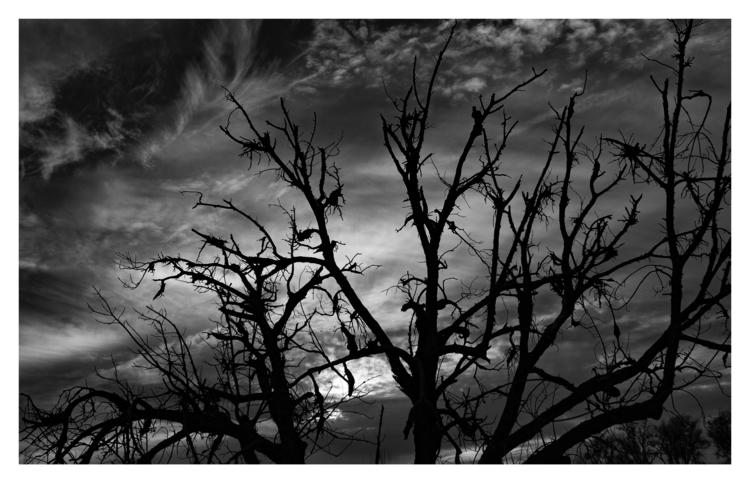 Sacramento River Sunset, CA - guillermoalvarez   ello