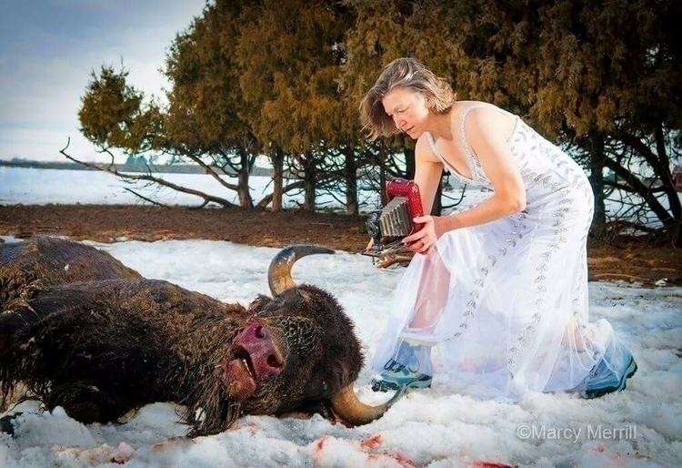 Shooting bison - photography, formalwearworninappropriately - marcymerrill | ello