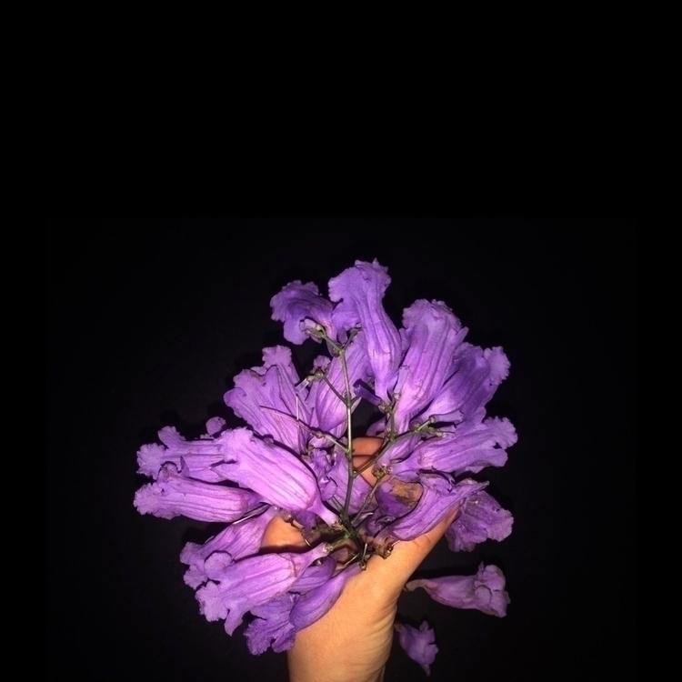 Flowerism Banksia victoriae - flowers - hypermaria | ello