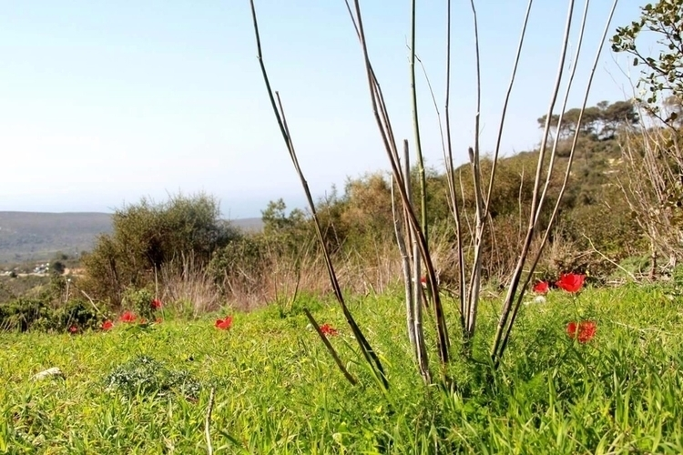 Carmel Mountain, Haifa. Canon D - khulud | ello