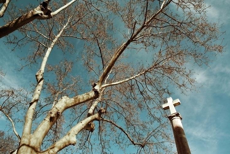 Encore des arbres - deligne | ello