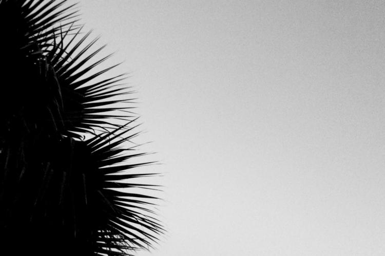 Palm Tree Darkness Apps - mikefl99 - mikefl99 | ello
