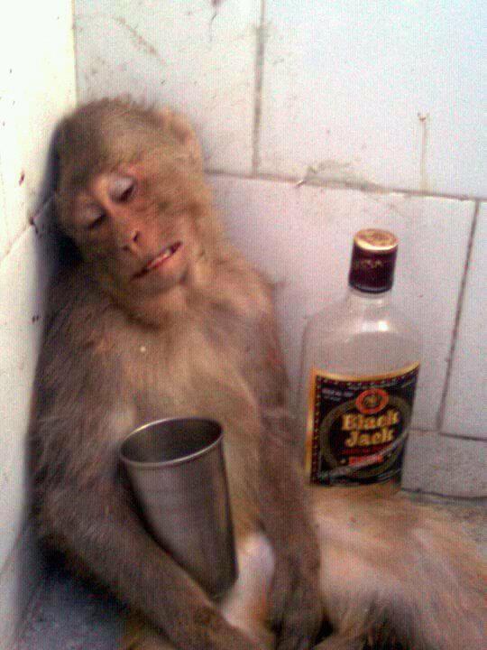 Laugh 4 funny animal jokes Humo - humoropedia | ello