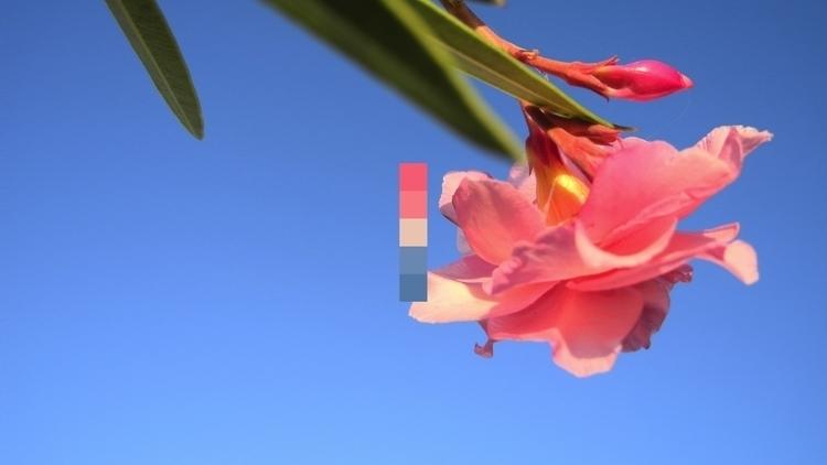 Color Mood week | Photo color p - aria_anastasiou | ello