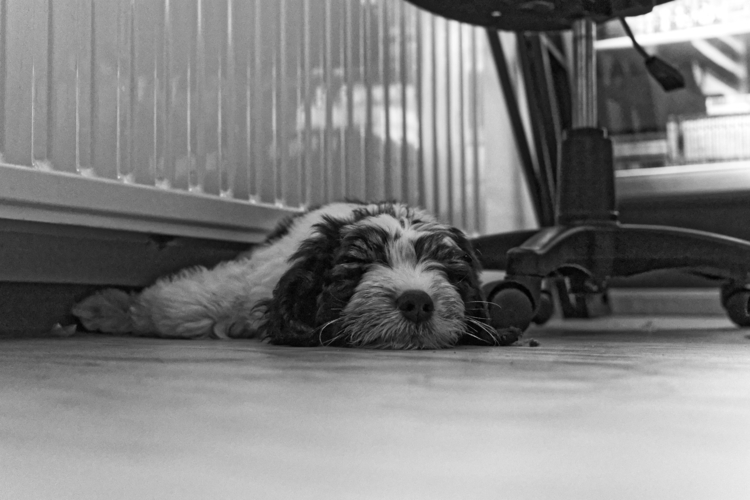 Meet George - dogsofello - manuelk | ello