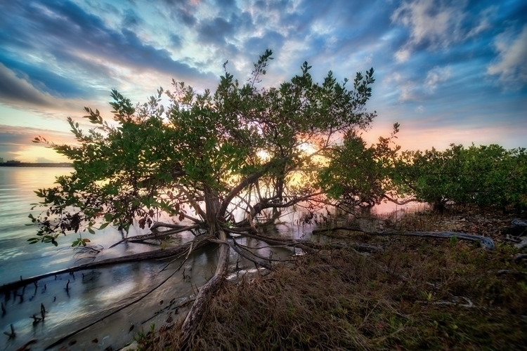 Overlook - Palmetto, florida, mangroves - rickschwartz | ello