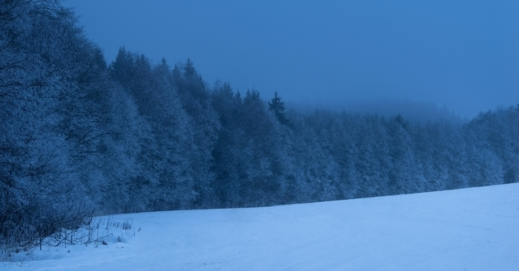 Frozen foggy forest dusk - landscape - haakondagestad | ello