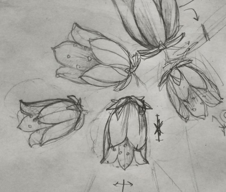 echeveria, succulove, succulents - jorge_montero | ello