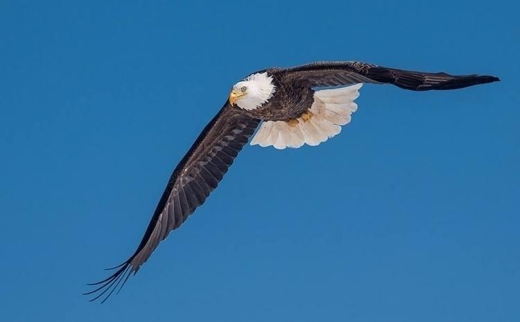 Blue skies eagles - tbiveteran | ello