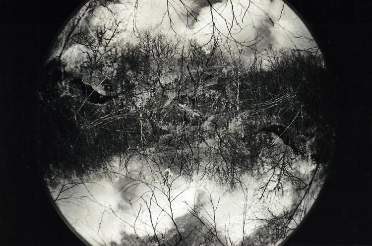 Trees mm - 1, fisheye, photo, photography - acidecabine   ello