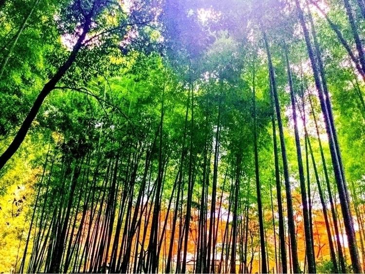 Bamboo forest - naomyb | ello