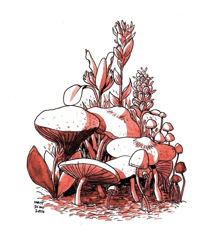 Mushrooms - art, drawing, illustration - mattschu   ello