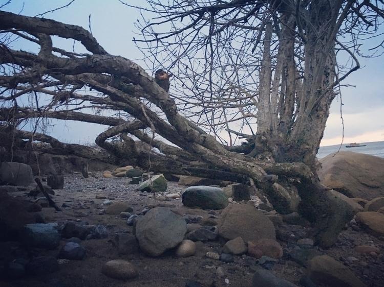 locustbeach, bellinghambay, pnw - kirpar | ello