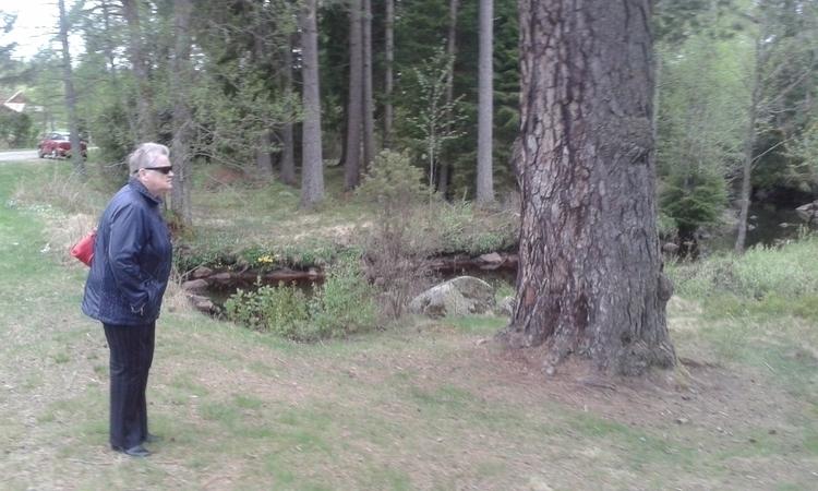 pine 600 years af JANos - Mellyrn - mellyrn | ello