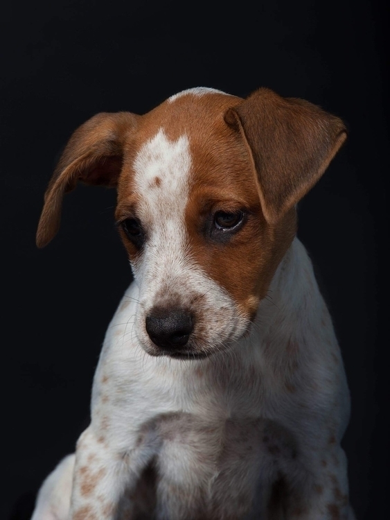 Guadeloupe Dog 03/17 Photograph - anitavolker | ello
