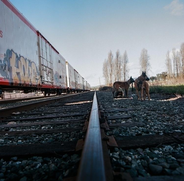 explore, ellorailways#ellodogphotography#ellofilmphotography#hasselblad#shotonfilm#120mm#mediumformat - teetonka   ello