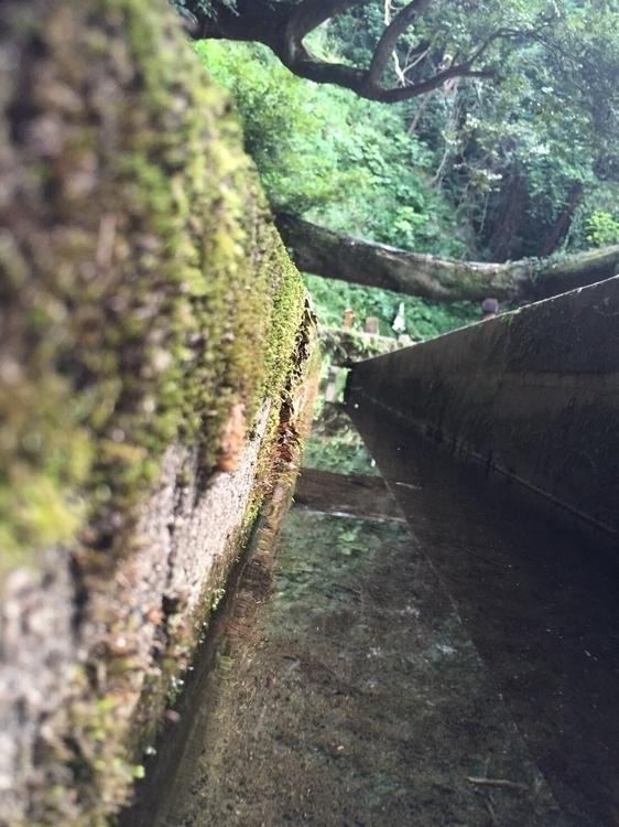 brook jingu shrine - kashima - kentarosuzuki | ello