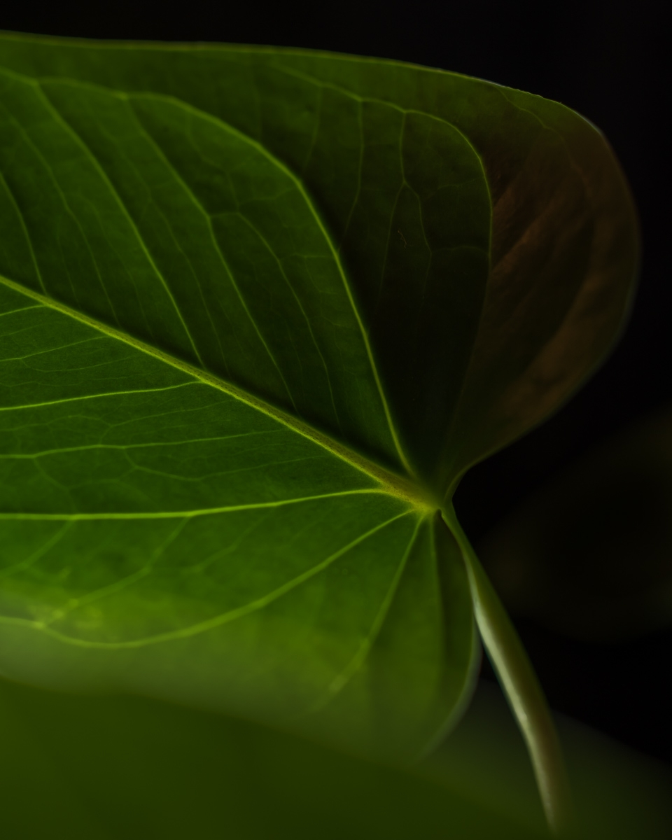 green plants kitchen window - botanical - peter_skoglund | ello