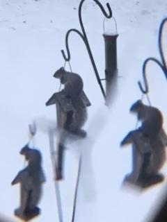 Squirrel glass - mephit   ello