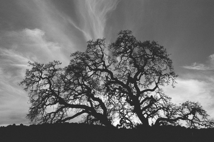 Golden Hour Film Photography 35 - dreamcaptureimages | ello