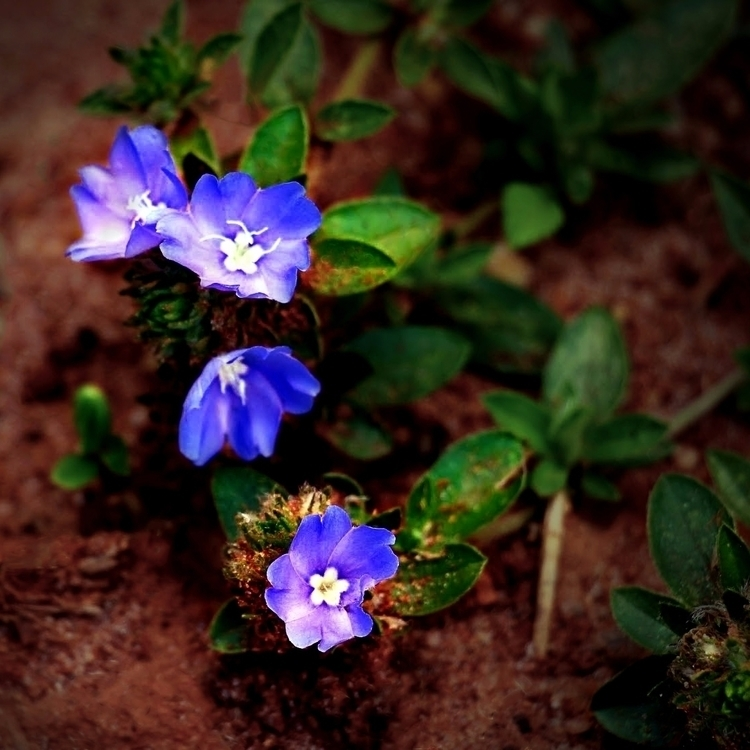 flowers, purple, small, bahia - paulobrito_ | ello