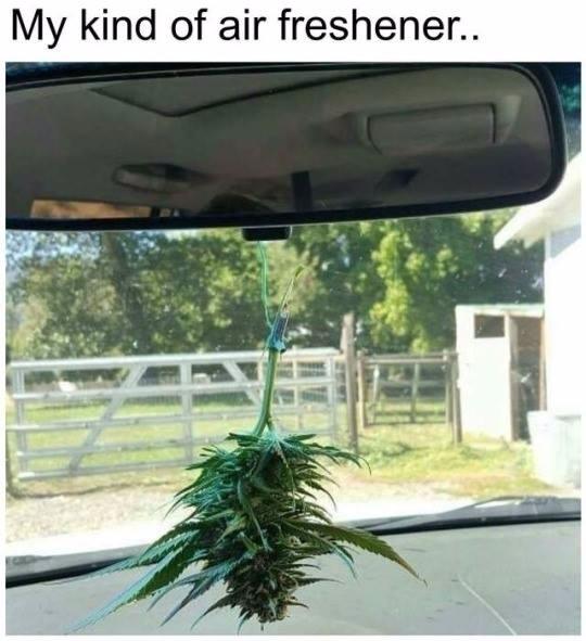 meme funny  - cropkingseeds, marijuana - cropkingseeds | ello