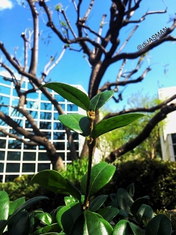 leaf, branch, tree, perspective - djjasman   ello