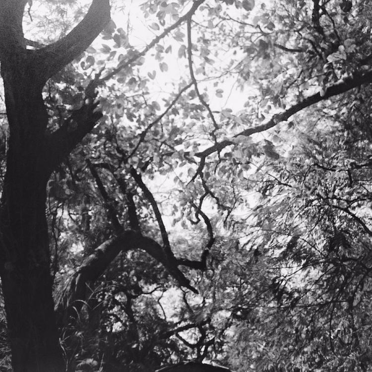 silence woods, hear, Chirping b - sonalidalal | ello