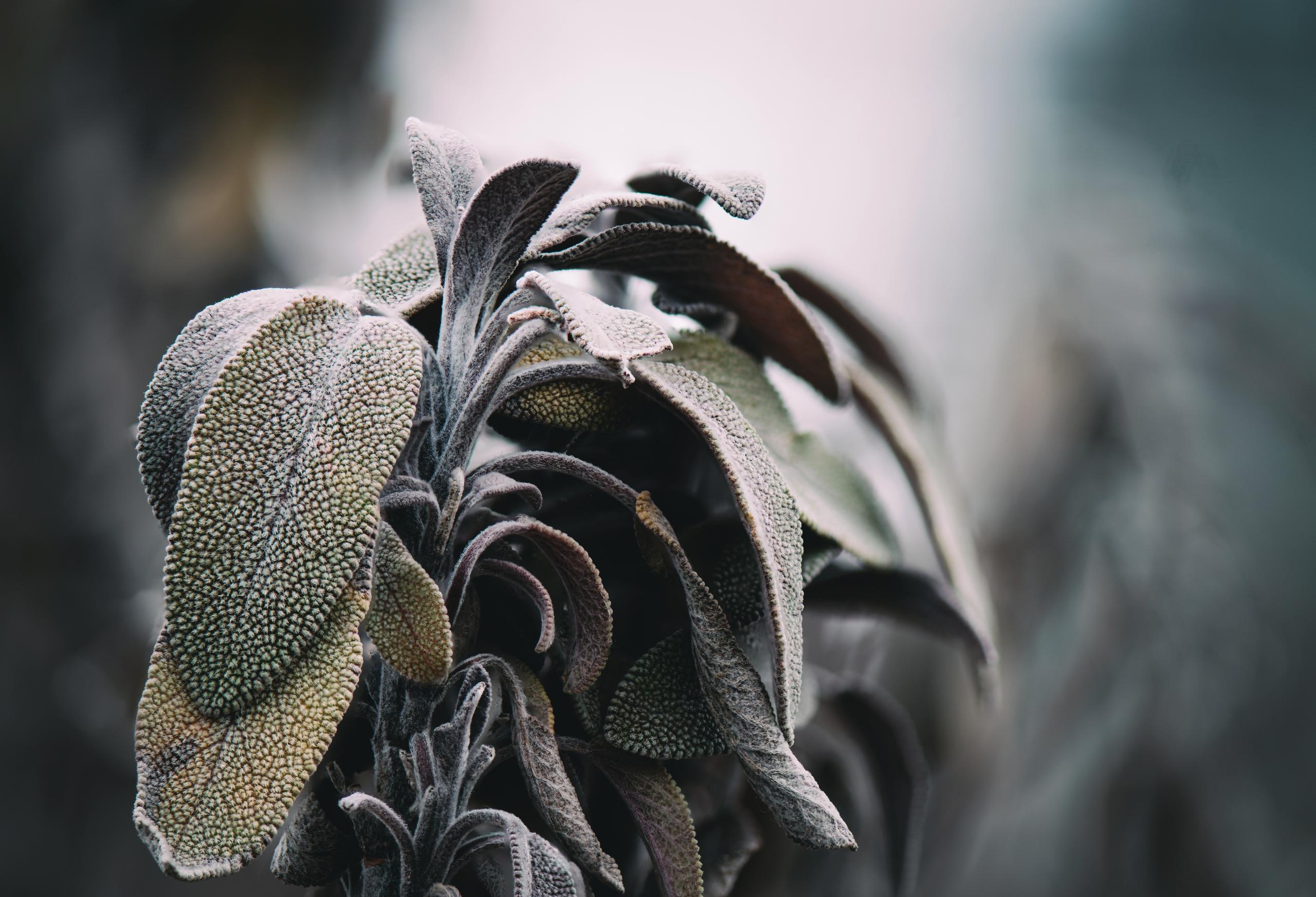 Fuzzed - layer white fuzz cover - rhinocerous | ello