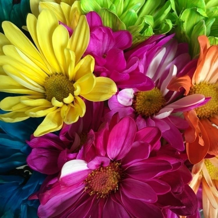 flowers, colorful - hippiejoe | ello