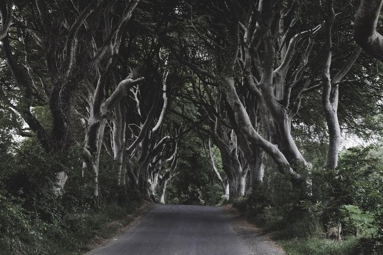 Dark Hedges, Northern Ireland  - skyler_brown | ello