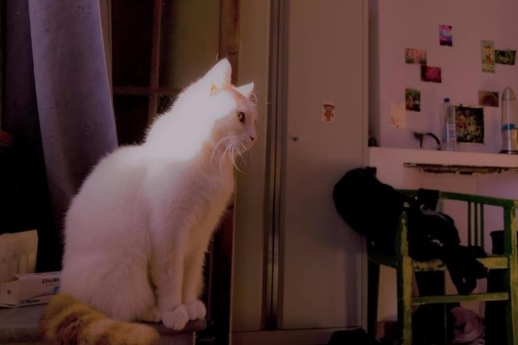 Noortje cat - geraldinegoedtkindt | ello