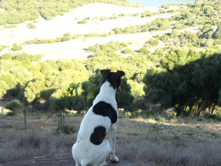 Breed dog Spain called RATENERO - geraldinegoedtkindt | ello